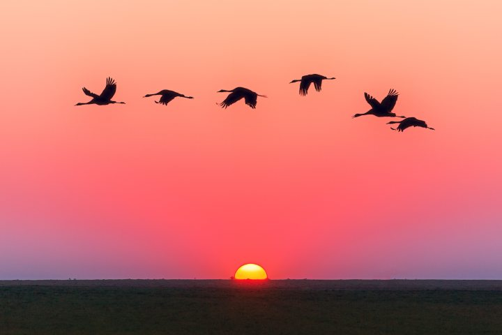 animals-avian-backlit-1126384