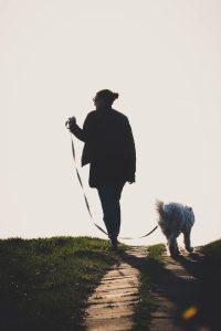 daylight-dog-dog-leash-2043021